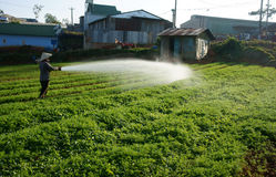 Vietnamese farmer watering on vegetable field Stock Photo