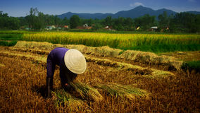 Vietnamese farmer Royalty Free Stock Photo