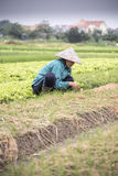 Vietnamese farmer at work Royalty Free Stock Images
