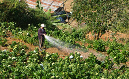 Vietnamese farmer working on flower garden in backwards way Stock Photos