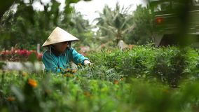 Vietnamese farmer working on flower garden stock video