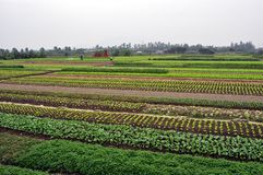Vietnamese farmers in the field Royalty Free Stock Photos