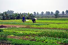 Vietnamese farmers in the field Royalty Free Stock Photo