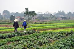 Vietnamese farmers in the field Stock Image