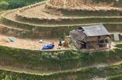 Vietnamese farmers harvesting rice on terraced paddy field Stock Image
