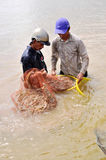 Vietnamese farmers are harvesting shrimps from their pond with a fishing net and small baskets in Bac Lieu city Stock Photography
