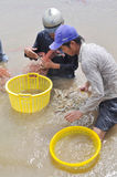 Vietnamese farmers are harvesting shrimps from their pond with a fishing net and small baskets in Bac Lieu city Royalty Free Stock Photo