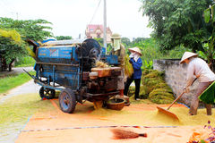 Vietnamese farmers threshing rice Royalty Free Stock Images