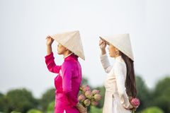 Vietnamese female group on a wooden boat Asian. two women stand on a wooden boat to collect lotus flowers. Three beautiful women. Wearing a Vietnamese dress stock photo