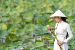 Vietnamese female on a wooden boat collecting lotus flowers. Asian women sitting on wooden boats to collect lotus. Beautiful girl royalty free stock photo