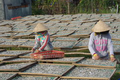 Vietnamese fish sauce factory