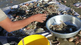Vietnamese fishermen sorts fresh catch seafood stock footage