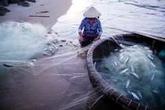 Vietnamese fisherwoman with conical hat check her nets for the catch fish from the beach. In vietnam stock images
