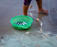 Vietnamese fisherwoman with conical hat check her nets for the catch fish from the beach. In vietnam stock photos