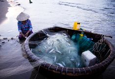 Vietnamese fisherwoman with conical hat check her nets for the catch fish from the beach. In vietnam stock photography