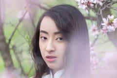 Vietnamese girl in White Ao Dai - almond blossoms Royalty Free Stock Photos