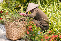 Vietnamese groundskeeper working in the garden Royalty Free Stock Photography