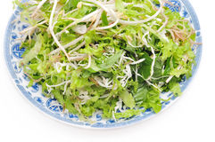 Vietnamese herbs Stock Image