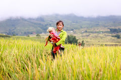 Vietnamese Hmong children in rice terrace river side o at Y TY town. LAO CAI, VIETNAM - OCT 23: Vietnamese Hmong children in rice terrace river side o at Y TY Stock Photography