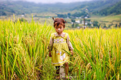 Vietnamese Hmong children in rice terrace river side o at Y TY town. LAO CAI, VIETNAM - OCT 23: Vietnamese Hmong children in rice terrace river side o at Y TY Royalty Free Stock Photography