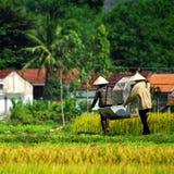 Vietnamese landbouwers Royalty-vrije Stock Foto's