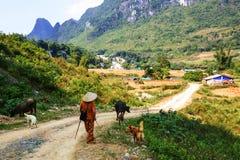 Vietnamese landscapes Stock Image