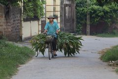 Vietnamese Man on Bicycle Stock Images