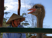 Vietnamese man singing a song and ostrich echoing to him stock images