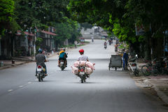 Vietnamese man transports piglets on a motorbike at a market Royalty Free Stock Photography