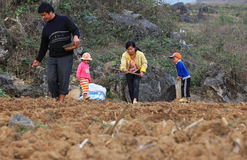 Vietnamese minority family starting a new season of corn in the field Stock Photo