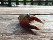 The Vietnamese mud crab, Scylla serrata. Vietnamese mud crab, Scylla serrata stock image
