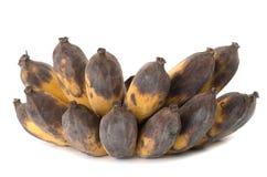 Vietnamese overripe yellow golden banana Stock Images