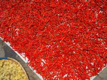 Vietnamese people dry red chilippers in the sun over the pavement in Hoian in Vietnam Royalty Free Stock Photos