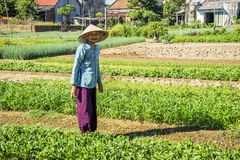 Vietnamese people on Vegetable field Stock Photos