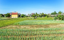 Vietnamese people on Vegetable field Stock Image