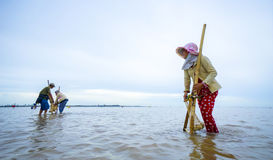 Vietnamese people working clam farms Stock Image