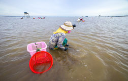 Vietnamese people working clam farms Stock Images