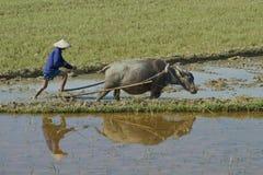 Vietnamese plowman Royalty Free Stock Image