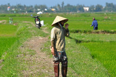 Vietnamese Rice Paddy Workers Stock Image