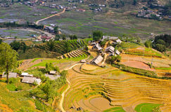 Vietnamese rice terraced fields Royalty Free Stock Images