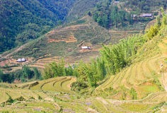 Vietnamese rice terraced fields Stock Photo