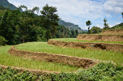 Vietnamese rice terraces Royalty Free Stock Photos