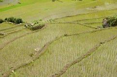Vietnamese rice terraces Royalty Free Stock Image