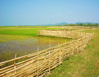 Vietnamese rural, paddy field,  bamboo fence Royalty Free Stock Photography