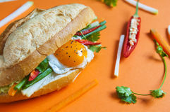 Vietnamese sandwich on the background. Fresh Vietnamese sandwich on the background Stock Images