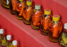 Vietnamese Snake Wine Royalty Free Stock Image