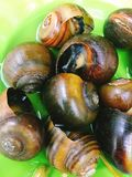 Vietnamese steamed snails Royalty Free Stock Image