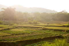 Vietnamese stepped rice field Stock Photo