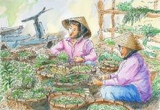 Vietnamese vegetable stall on a local market Stock Photos