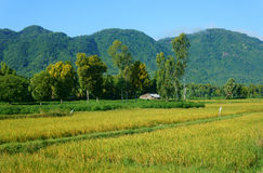 Vietnamese village, mountain, house, paddy field Stock Image